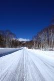 Camino nevado del abedul blanco Foto de archivo libre de regalías
