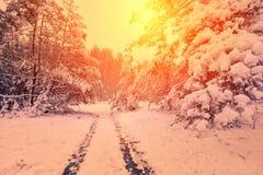 Camino nevado en bosque del yhe Fotos de archivo libres de regalías