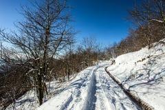 Camino nevado en bosque entre las montañas Fotografía de archivo libre de regalías