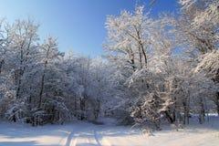 Camino nevado en el bosque Imagen de archivo libre de regalías