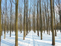 Camino nevado en parque del invierno con los árboles con las hojas caidas Fotos de archivo
