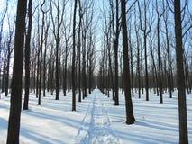 Camino nevado en parque del invierno con los árboles con las hojas caidas Foto de archivo libre de regalías