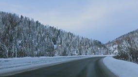 Camino nevado hermoso a través de un bosque HD, 1920x1080 del pino metrajes
