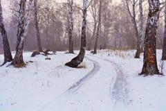 Camino nevado a través de una arboleda del abedul Foto de archivo libre de regalías
