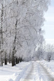 Camino nevado y abedul Fotos de archivo libres de regalías