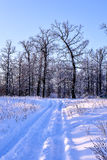 Camino nevoso del invierno en un bosque en un día claro Foto de archivo libre de regalías
