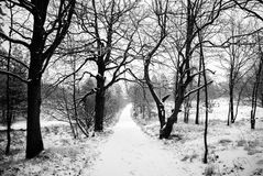 Camino nevoso solo en una madera Fotos de archivo