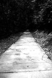 Camino oscuro Imagen de archivo libre de regalías