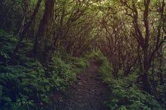 Camino oscuro en el bosque fotografía de archivo libre de regalías