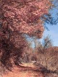 Camino otoñal Foto de archivo libre de regalías