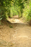 Camino pacífico del campo en la reserva natural de Cheile Nerei Foto de archivo