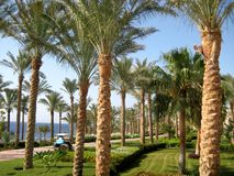 Camino, palmeras y flores en una playa del Mar Rojo Imagenes de archivo