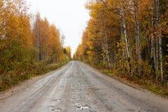 Camino para los coches en el otoño abedules Foto de archivo libre de regalías