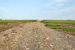 Camino para uso general entre los campos del arándano Foto de archivo
