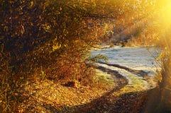 Camino a partir del otoño al invierno imagen de archivo libre de regalías