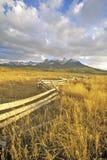Camino pasado del rancho del dólar, Ridgeway, Colorado fotografía de archivo