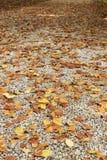 Camino pavimentado con las hojas del amarillo en otoño Imagen de archivo