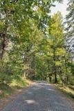 Camino pavimentado con los adoquines que llevan al castillo de Schonborn Chynadiyovo, Ucrania Fotografía de archivo