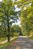 Camino pavimentado con los adoquines que llevan al castillo de Schonborn Chynadiyovo, Ucrania Foto de archivo