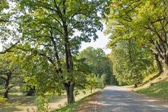 Camino pavimentado con los adoquines que llevan al castillo de Schonborn Chynadiyovo, Ucrania Foto de archivo libre de regalías