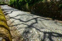Camino pavimentado en el bosque Imágenes de archivo libres de regalías