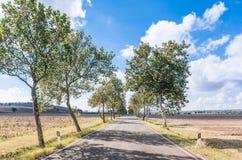 Camino pavimentado en el campo toscano Fotografía de archivo libre de regalías
