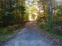Camino pavimentado viejo en bosque Imagen de archivo libre de regalías