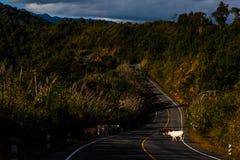 Camino a Phuka, NaN Foto de archivo libre de regalías