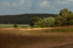 Camino polvoriento que lleva hacia bosque cercano Foto de archivo