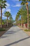 Camino privado vacío alineado con las palmeras  Fotografía de archivo libre de regalías