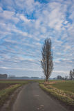Camino que corre más allá de un árbol Foto de archivo