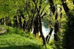 Camino que recorre del bosque Imagenes de archivo