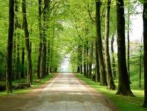 Camino que recorre del bosque del camino Imagen de archivo