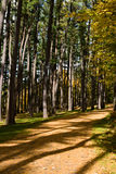 Camino que recorre en el parque de Nueva York Imagenes de archivo