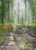 Camino quebrado después de la lluvia en un bosque del verano Imágenes de archivo libres de regalías