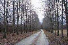 Camino recto con el camino seco del árbol a un lado fotografía de archivo