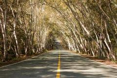Camino recto con los árboles Fotos de archivo