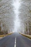 Camino recto en el campo Árboles en la escarcha estacional fotografía de archivo libre de regalías