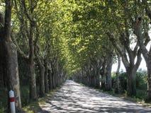 Camino recto largo debajo de un toldo de árboles Foto de archivo