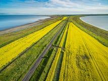 Camino recto que pasa a través de campos y de los lagos amarillos del canola en Australia - visión aérea Imágenes de archivo libres de regalías