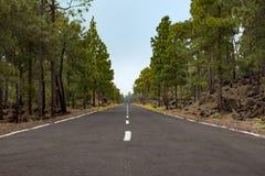 Camino recto vacío con paisaje del bosque Imagen de archivo