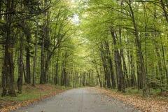 Camino reservado en Wisconsin septentrional Imagenes de archivo