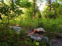 Camino rocoso Imagen de archivo libre de regalías
