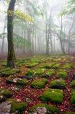 Camino rocoso en bosque de niebla Imagenes de archivo