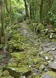 Camino rocoso en un bosque verde subtropical mojado Azores, Portuga Imagenes de archivo
