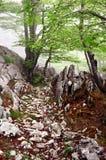 Camino rocoso a través del bosque Imagen de archivo