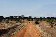 Camino rojo a la selva africana Fotografía de archivo libre de regalías