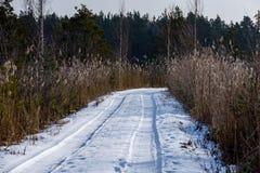 camino romántico de la grava en bosque del árbol del invierno Fotos de archivo libres de regalías