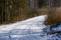 camino romántico de la grava en bosque del árbol del invierno Imagen de archivo libre de regalías
