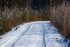 camino romántico de la grava en bosque del árbol del invierno Foto de archivo libre de regalías